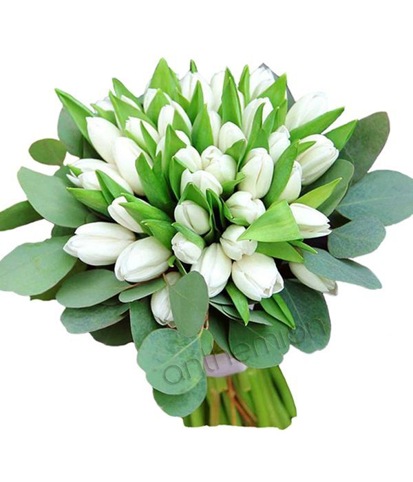 Bouquet of 40 white tulips