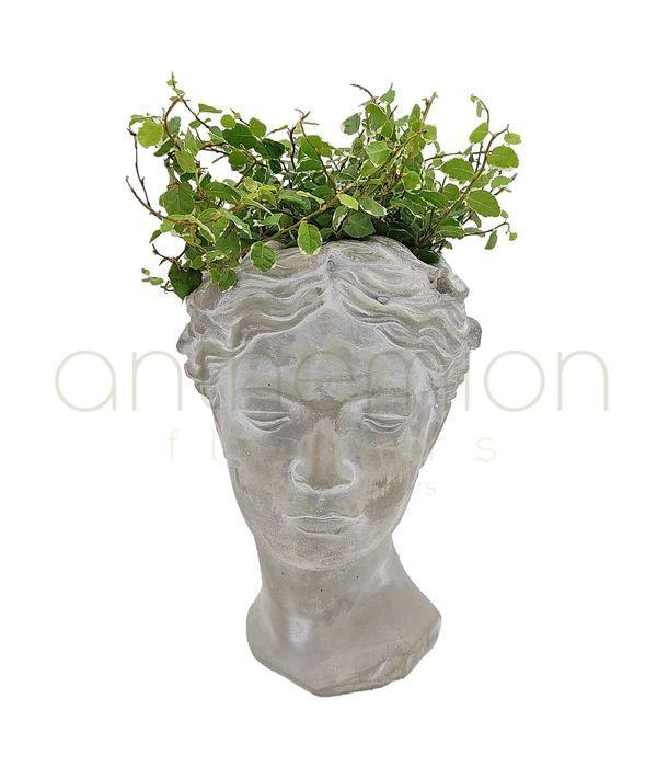 Διακοσμητικό τσιμεντένιο κεφάλι με φυτό