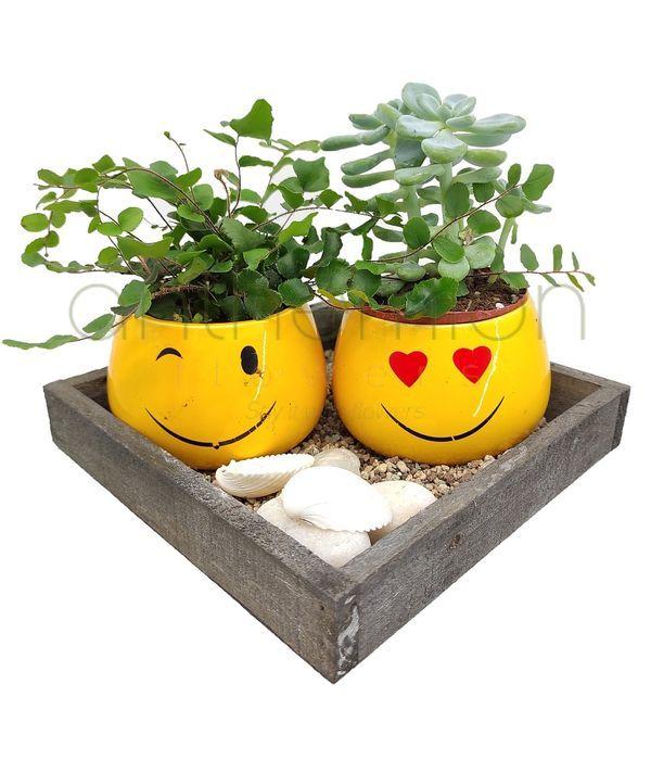 Κεραμικές φατσούλες με φυτά σε δίσκο