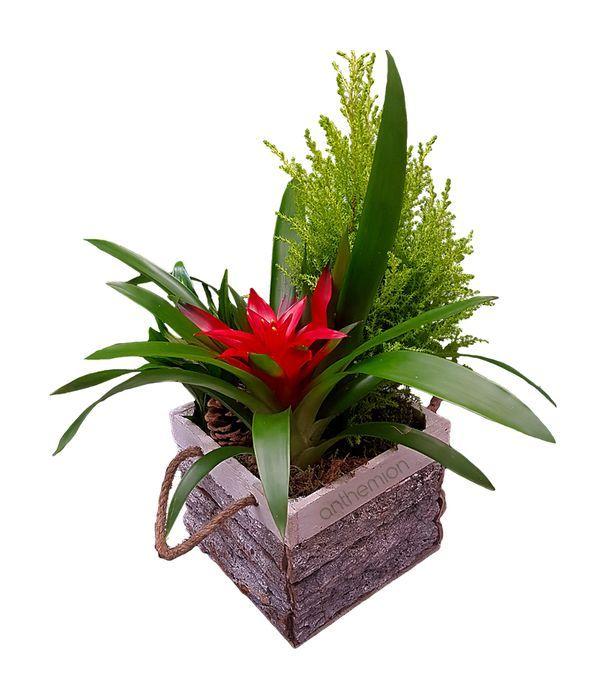 Τροπική Σύνθεση Φυτών σε Ξύλινη Βάση