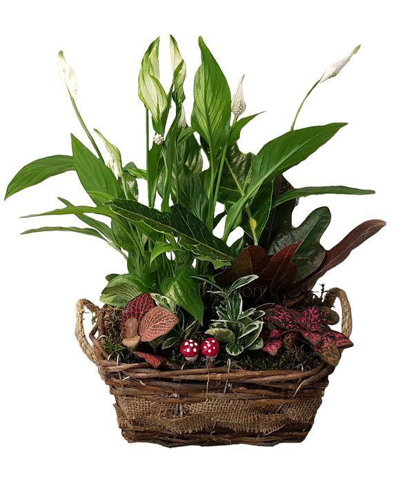 Μακρόστενο καλάθι με φυτά