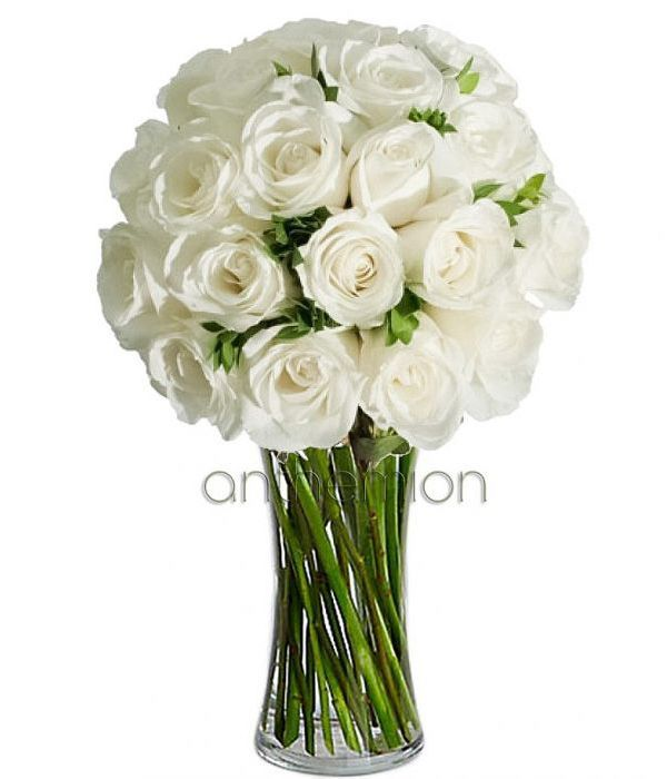 30 Gorgeous white roses