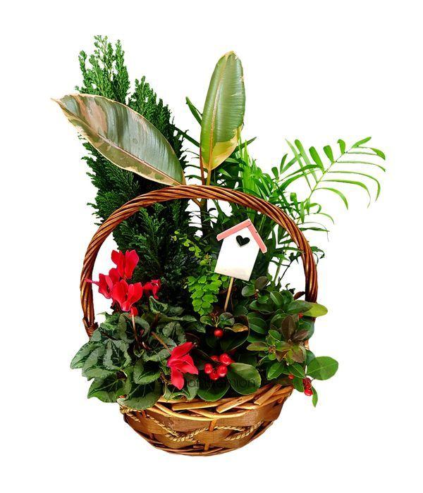 Σύνθεση Φυτών σε Γιορτινό Καλάθι