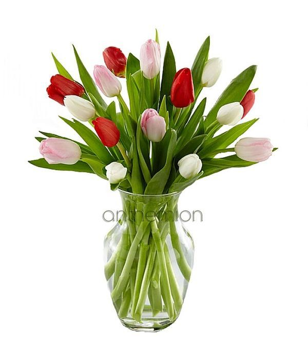 Fresh lovely tulips