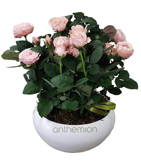 Κεραμική βάση με 3 ροζ τριανταφυλλιές
