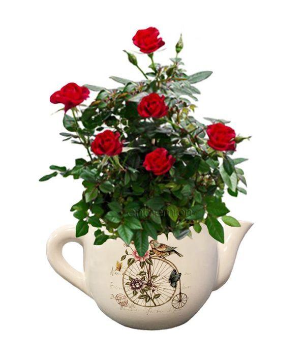 Κεραμική τσαγιέρα με κόκκινη τριανταφυλλιά