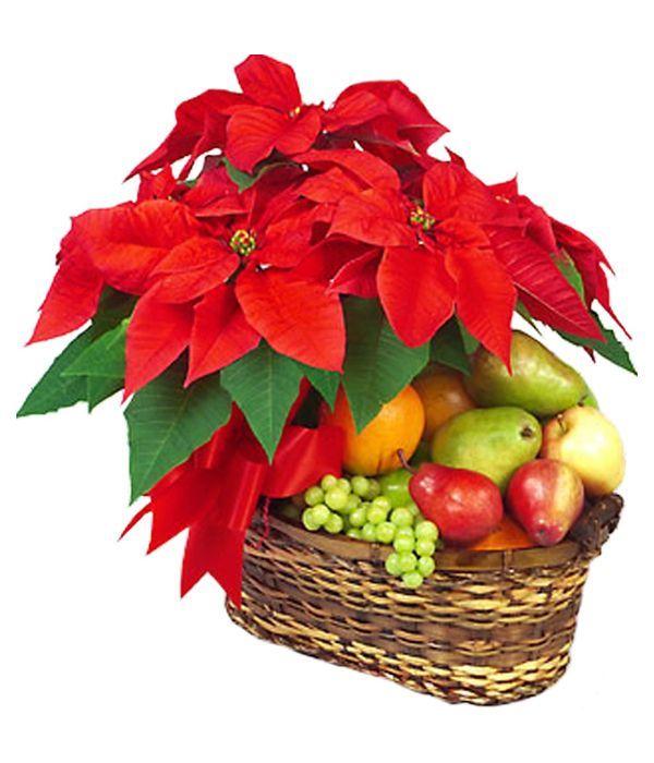 Poinsettia and Fruits