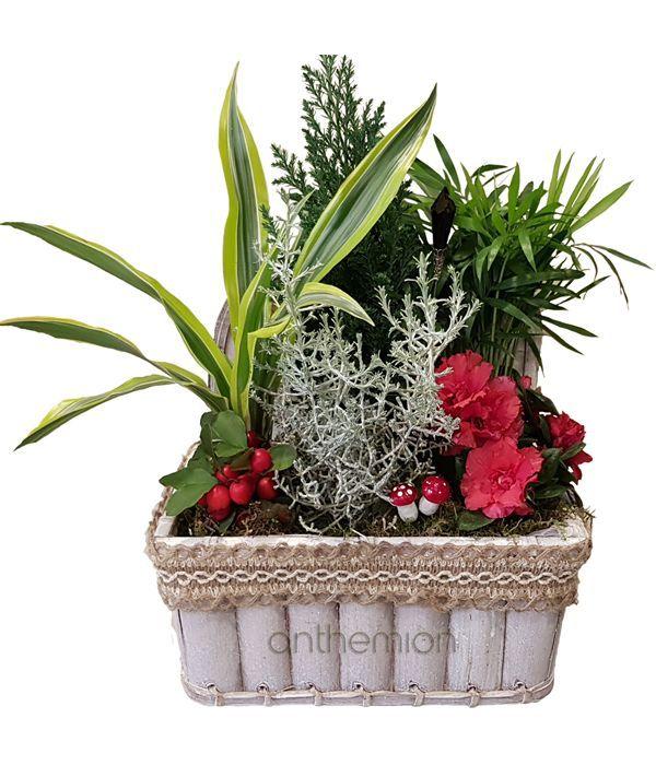 Κήπος φυτών εσωτερικού χώρου