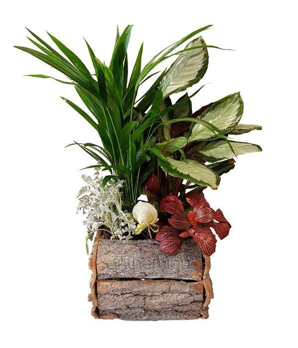 Ποικιλία φυτών σε ξύλινη βάση