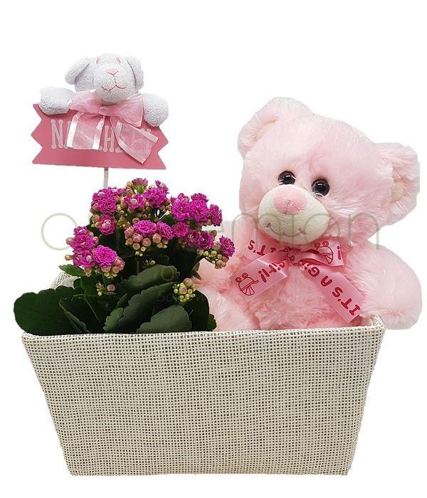Kalanchoe arrangement for girls
