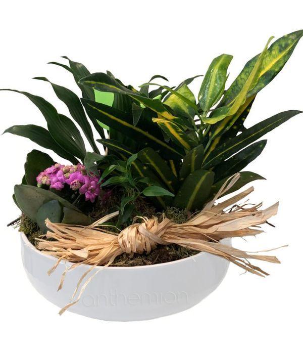 Wonderful Plant Arrangement