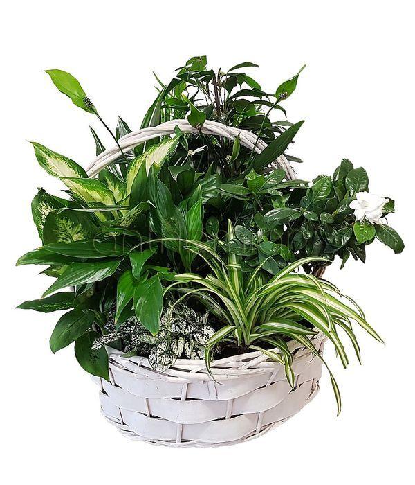 Καλάθι με ανθισμένα και πράσινα φυτά