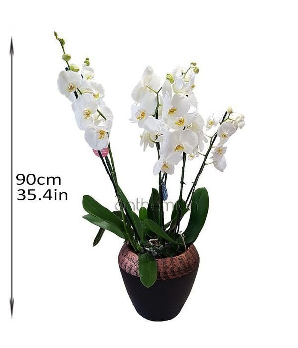 White orchids in a ceramic base
