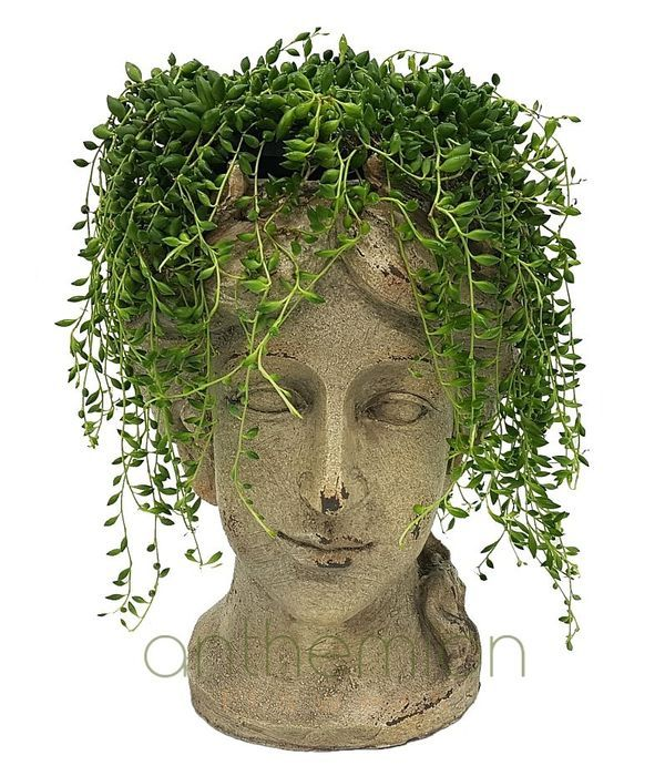 Senecio in ceramic head