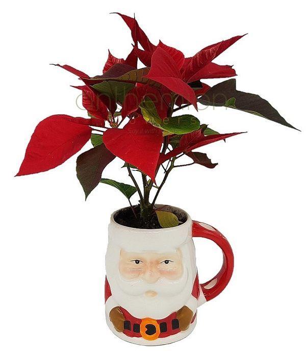 Santa Claus mug with poinsettia