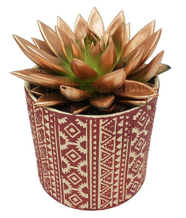 Christmas succulent in ceramic pot