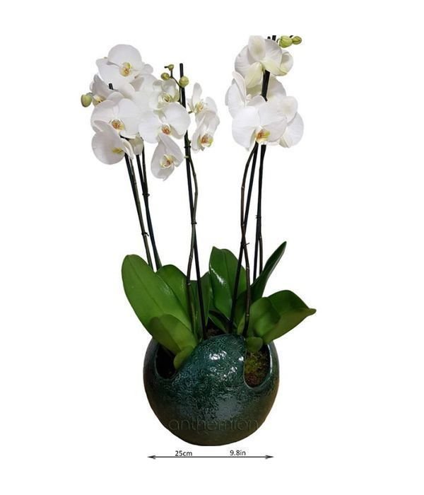 Ceramic ball filled with orchid plants