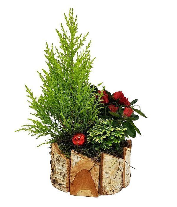 Χριστουγεννιάτικα φυτά σε ξύλινη βάση