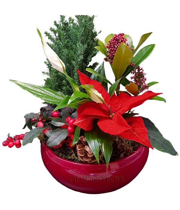 Σύνθεση φυτών σε κόκκινο κασπώ