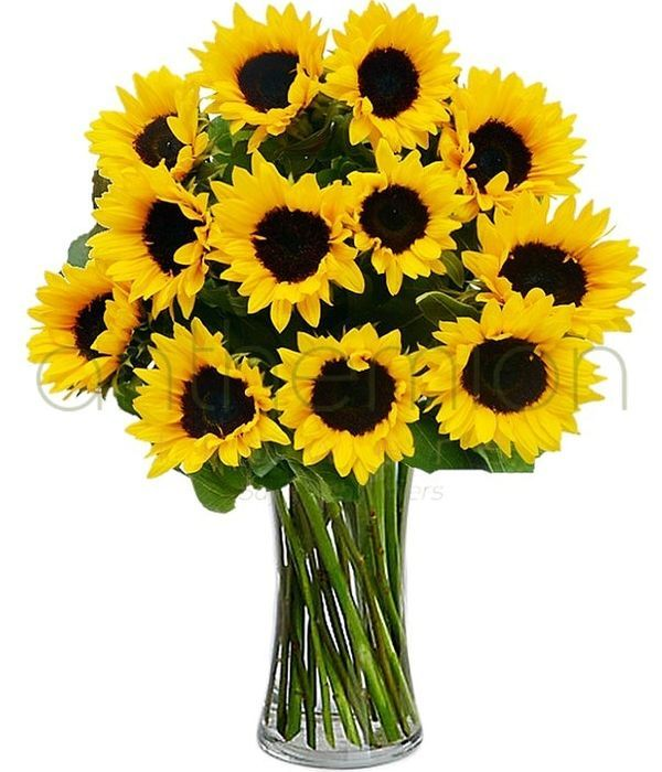 Bouquet of 15 bright sunflowers