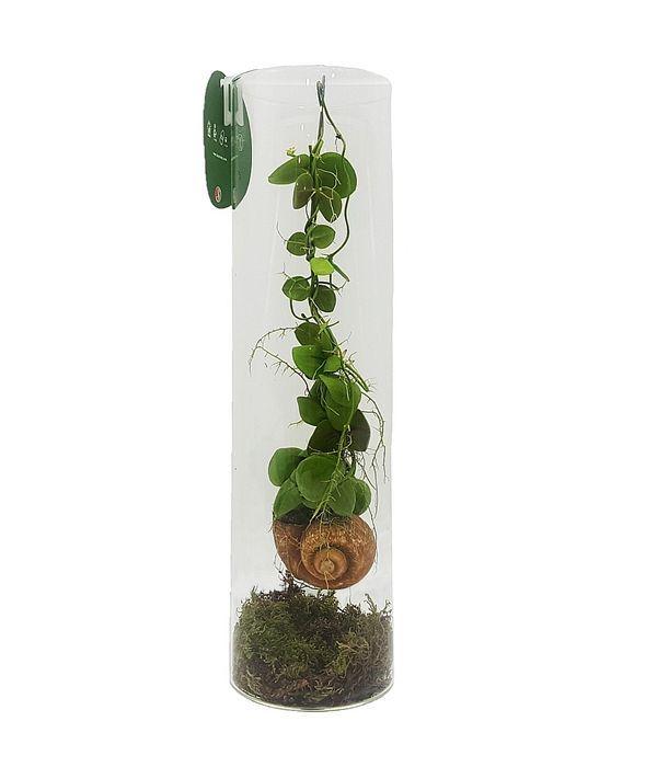 Σύνθεση με φυτό σε σαλιγκάρι