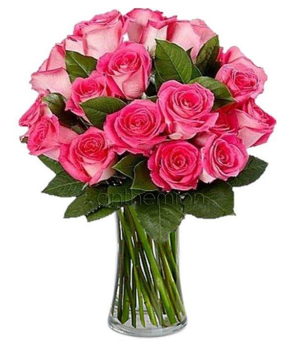 Ρομαντικά φούξια τριαντάφυλλα