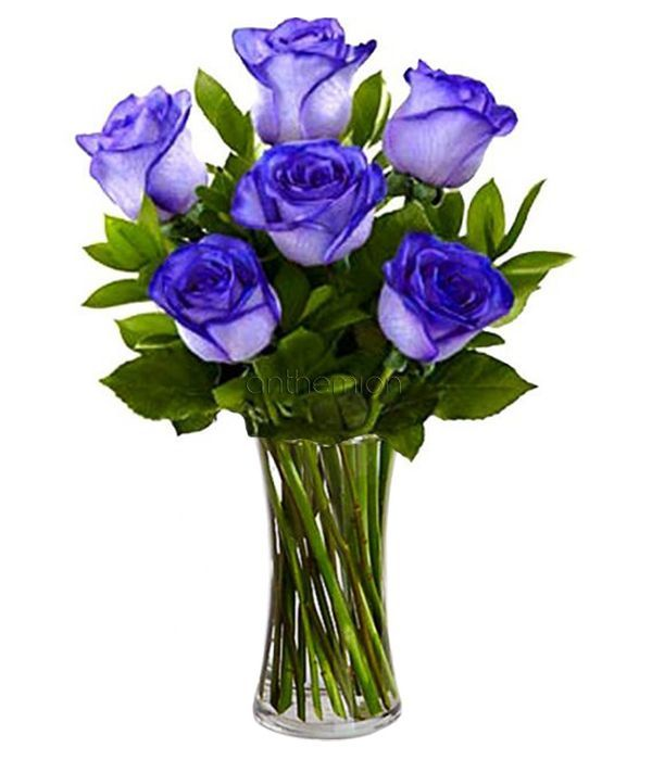 Bouquet of 6 blue roses