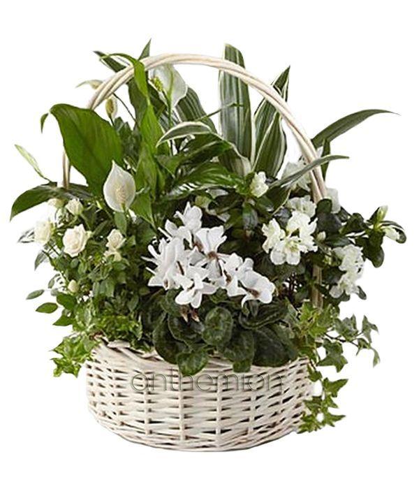 Λευκή σύνθεση φυτών σε καλάθι