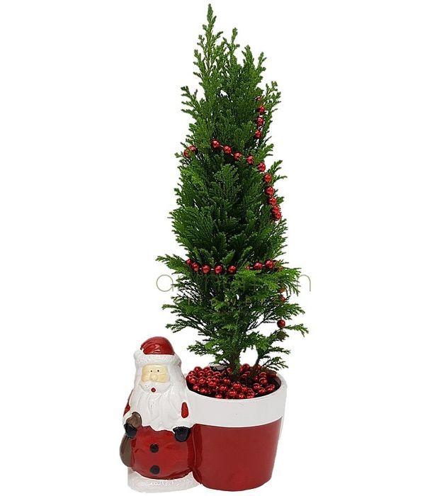 Άγιος Βασίλης με Χριστουγεννιάτικο ελατάκι