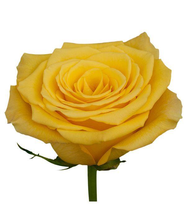 Κίτρινα Τριαντάφυλλα Εισαγωγής ανά τεμάχιο