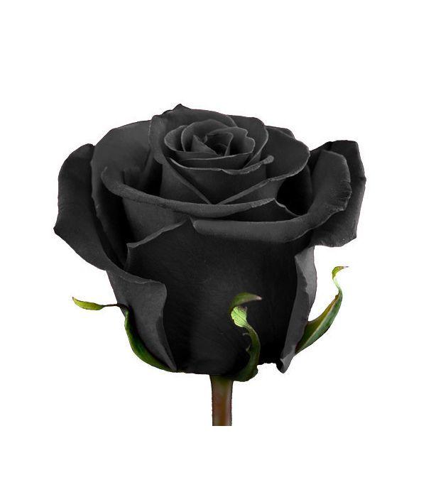 Μαύρα Τριαντάφυλλα με το τεμάχιο
