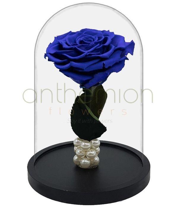 Παντοτινό μπλε τριαντάφυλλο (Μεγάλο μέγεθος)