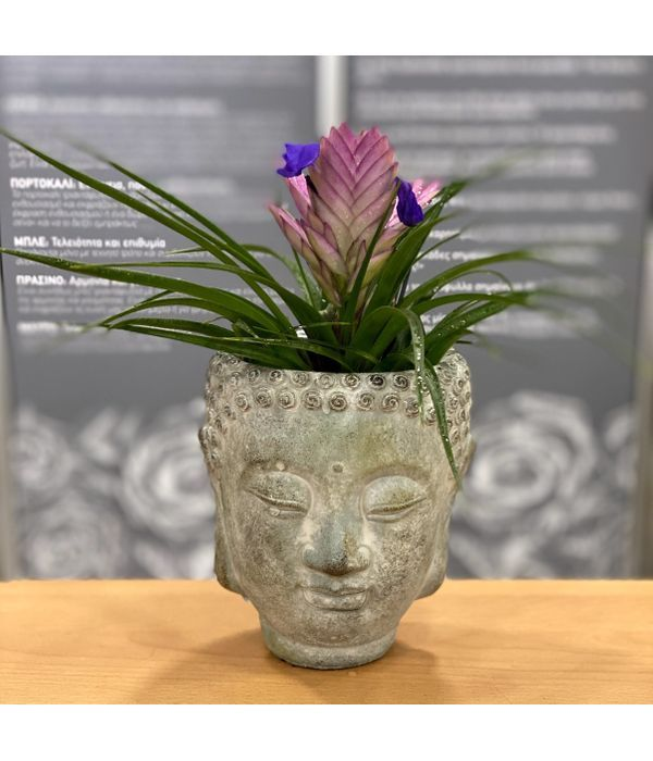 Tillandsia Plant with Buddha