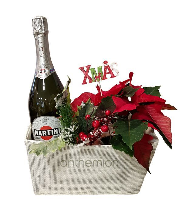 Poinsettia plant with ASTI MARTINI sparkling wine