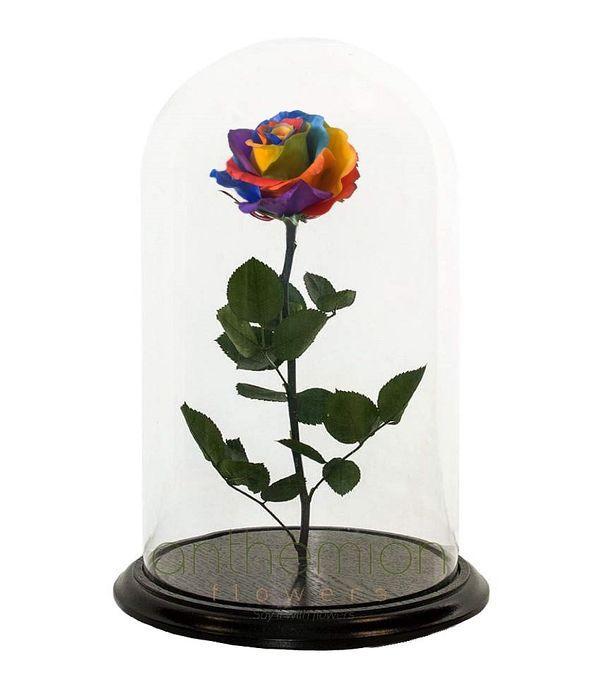 Πολύχρωμο forever rose (Μεσαίο μέγεθος)