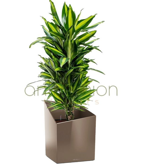 Beauty and elegant style (self watering pot)