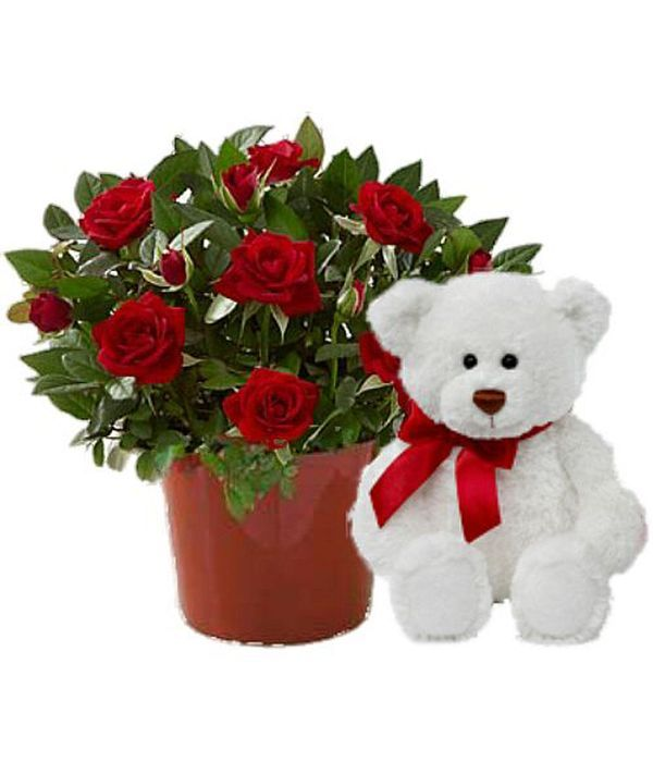 Rose plant with teddy bear