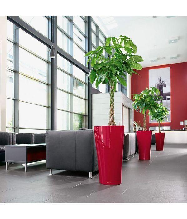 Sansivieria in red stylish self watering pot
