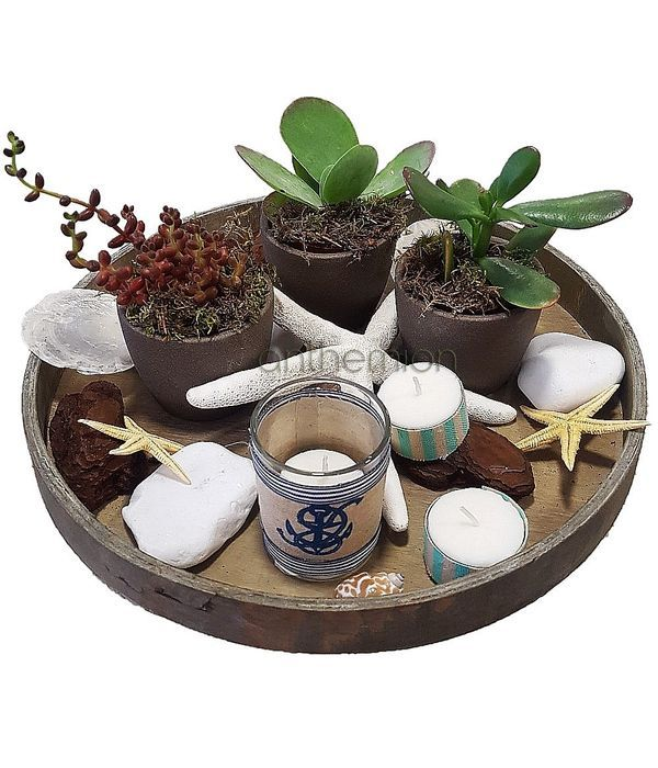 Wooden tray with succulents in ceramic pots