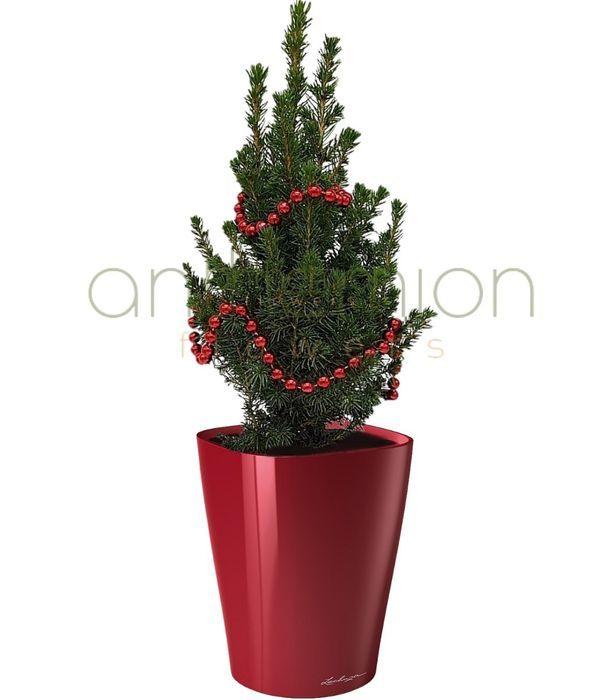 Christmas tree in stylish self watering pot