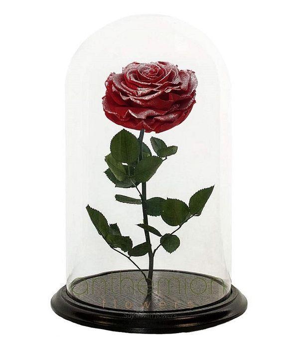 Δίχρωμο παντοτινό τριαντάφυλλο (Μεγάλο μέγεθος)