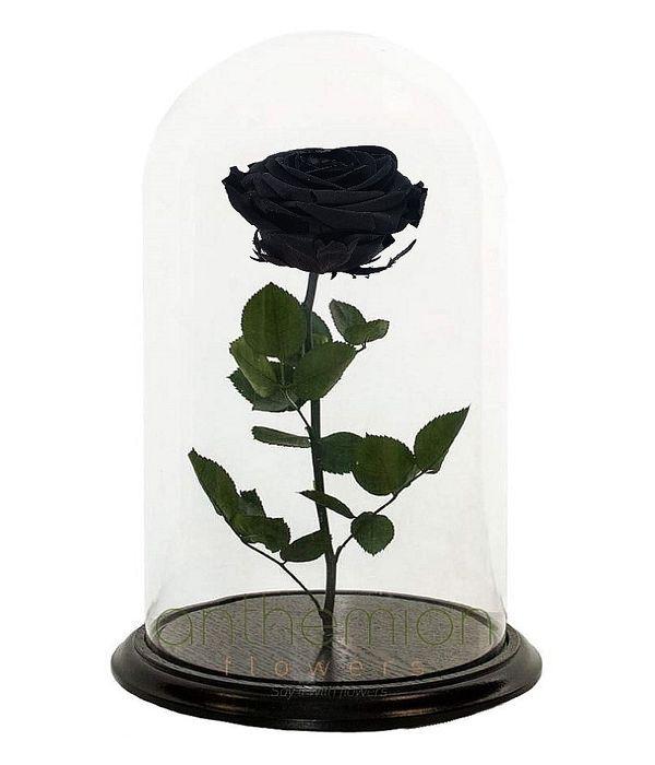 Μαύρο Forever Rose (Μεγάλο μέγεθος)