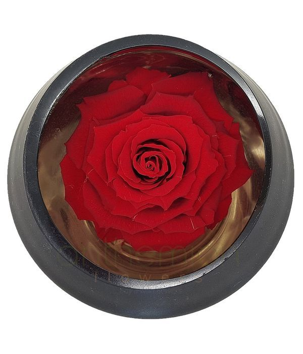 Red forever rose in glass/mirror base
