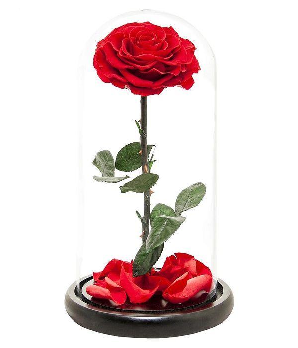 Παντοτινό τριαντάφυλλο - Forever Rose