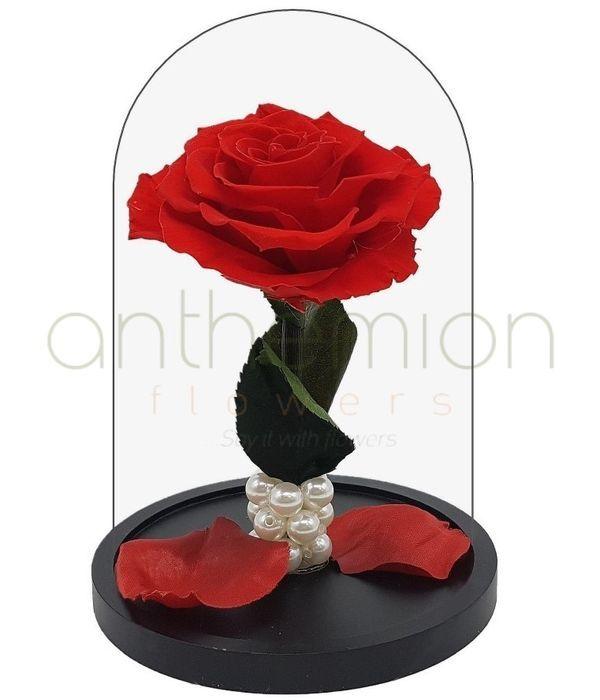 Παντοτινό τριαντάφυλλο - Forever Rose (Μεγάλο μέγεθος)