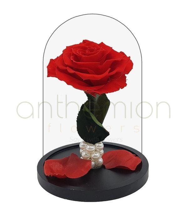 Forever Rose Μπλε Μικρό