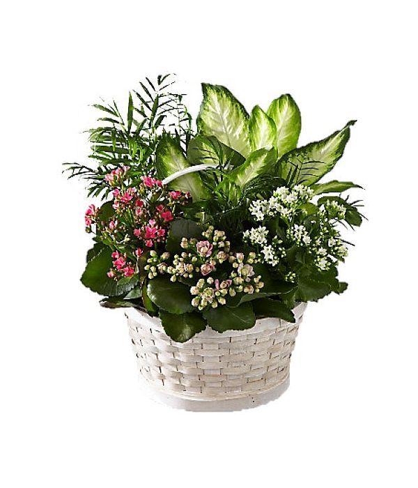 Σύνθεση φυτών σε καλάθι