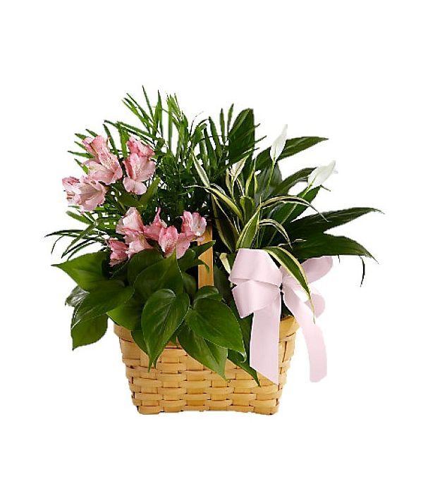 Καλαίσθητη σύνθεση με φυτά σε καλάθι