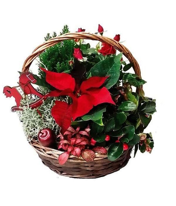 Festive Plant Arrangement