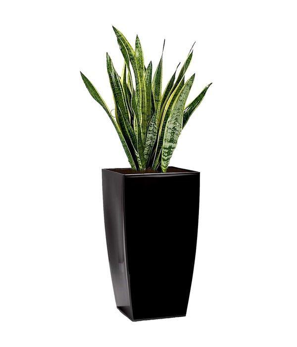 Όμορφη ψηλή γλάστρα με φυτό επιλογής σας